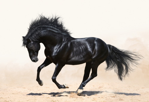 Black Beauty tugged at our heartstrings